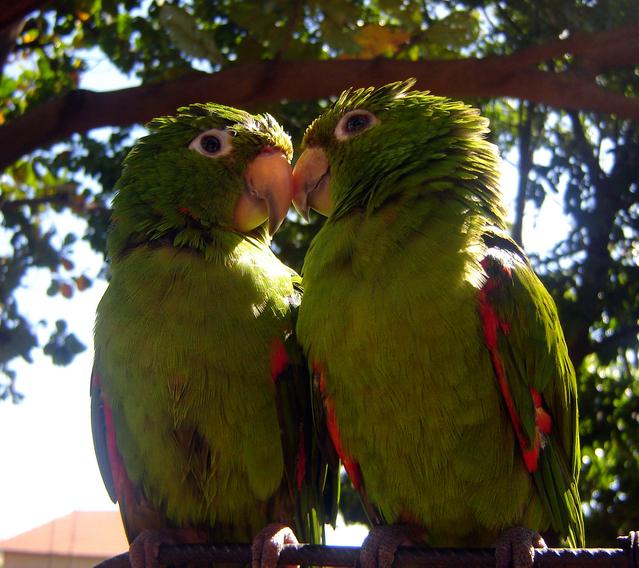 lovebird_sergioroberto